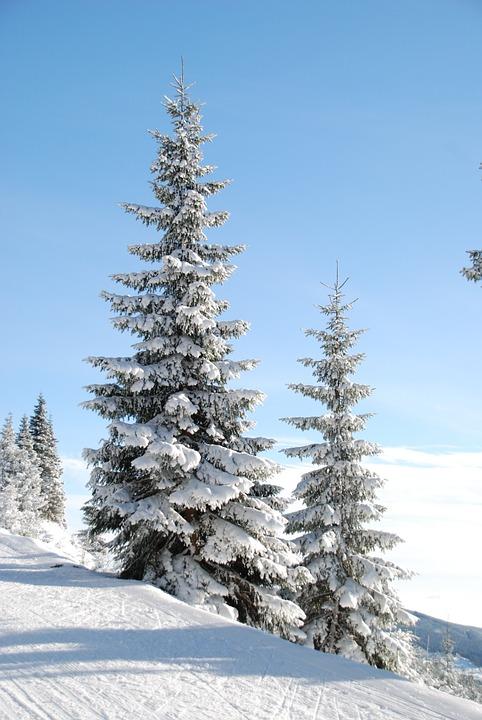 winter-5701_960_720
